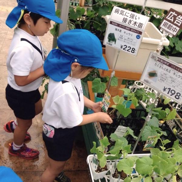 野菜の苗を購入。園庭に植えて、収穫の日を待つ
